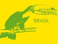 Tucano Brasileiro