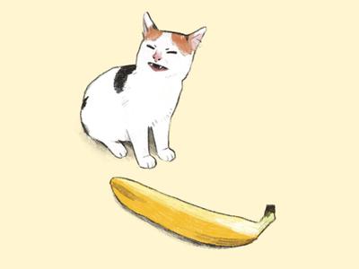 Angry cat no banana
