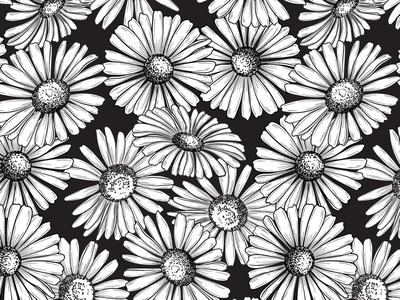 Daisy Days jennifer novak graphic floral blackwhite repeating patterns blooms floral illustration illustration textiles surface design daisy