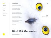 Design of the bird gene bank website