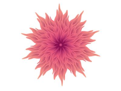 Chrysanthemum   Abstract Blend Flower