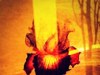 Iris 2. Delirium