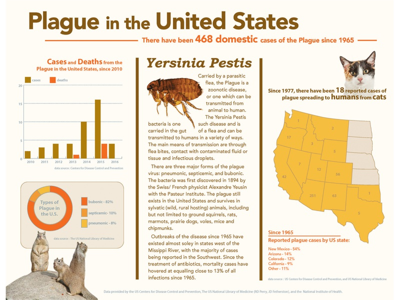Infographic - Plague In The Uniter States indesign info graphic typography graphic design infographic design infographic