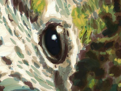 Hummingbird Eye painting illustration artrage