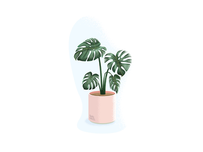 Monstera (Swiss Cheese Plant) Illustration