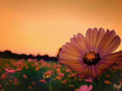 Showa Kinen Park(国営昭和記念公園) adobe camera raw design nik はな 花 tutorial 公園 park sky fower fleur colors çiçek blume adobe 꽃다발 꽃 photoshop