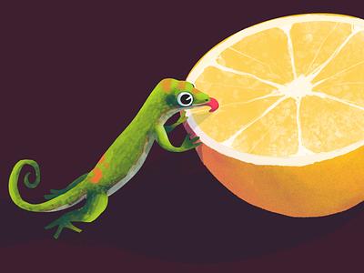 Gecko <3 Citrus eat orange citrus lizard gecko animal cartoon character characterdesign illustration