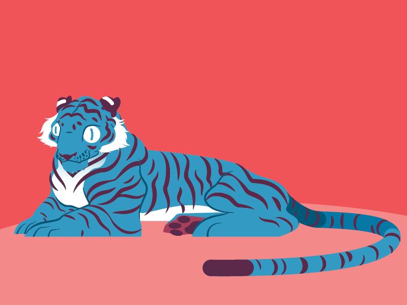 Tiger tiger design vector character cartoon illustration characterdesign animal