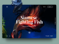 Siamese Fish Map