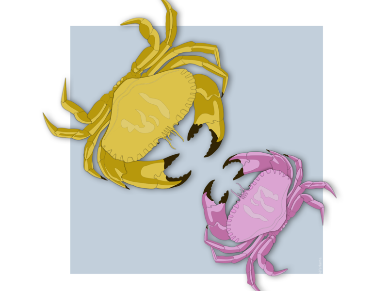 Fight Of Colored Crabs fight color crabs sea web sketch illustration flat design