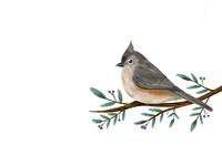 Birdy 03