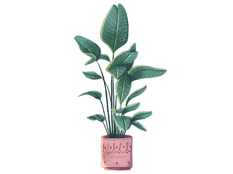 Plant botanical illustration children illustration editorial illustration illustration home plant