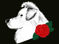 Deaf Dogs of Oregon - Profile 1
