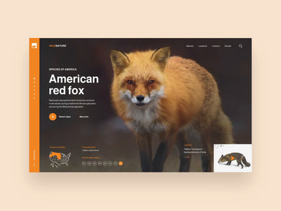 Web Design Concept: Education usa deer fox animals homepage web design company web landing page web design agency web design ui interface ux ui user interface design ramotion user experience