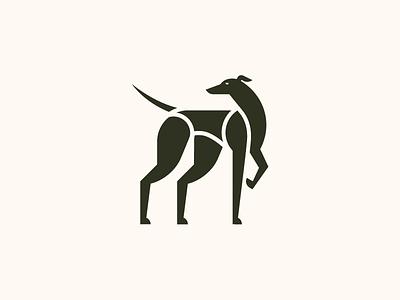 Greyhound hunting run breed dog greyhound