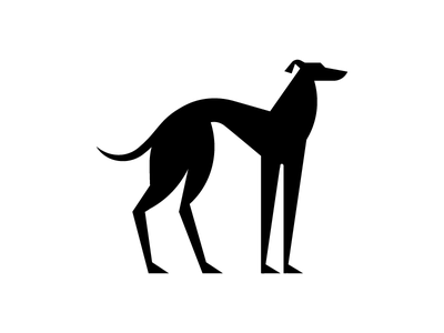 Greyhound elegant fashion sport breed dog greyhound