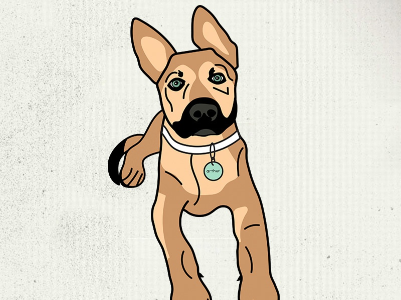 Arthur the pup paws tail collar ears portrait arthur puppy dog german shepherd