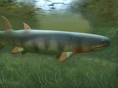 Eusthenopteron fish paleo paleoart paleontology art art direction illustration