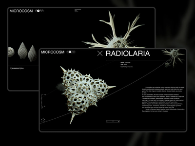 MICROCOSM foraminifera radiolaria 3d biology science touch ux art direction ui cosm micro