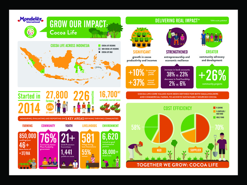 Cocoa Life Infographic data visualisation design vector illustration info graphic