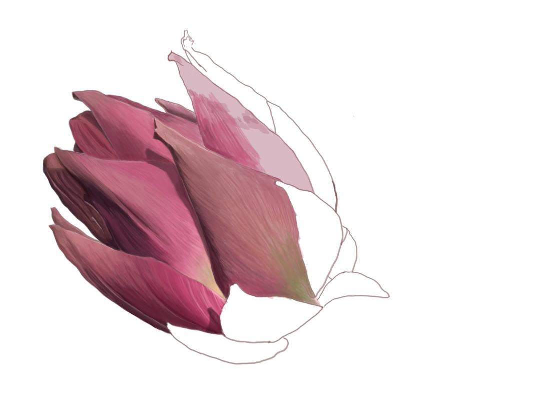 Artichoke inprogress artichoke ui digitalpainting digitalart illustration cooking illustrator vegetable foodillustration food art design