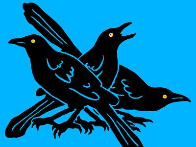 Taco Raptors austin crow black bird grackle bird