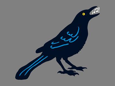 Grackle! black bird austin bird grackle