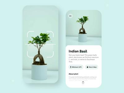 Know about any plant app exploration minimal minimalistic minimalism ui  ux uidesign mobile ui mobile plant app plant details plants plant typography flat branding design