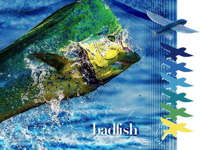 Badfish Co. Brand Book Gradient Color Selection No. 2