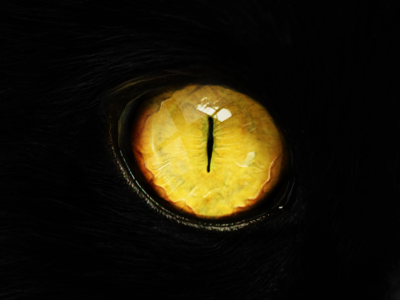 Eye cat eye mysterious yellow cute see