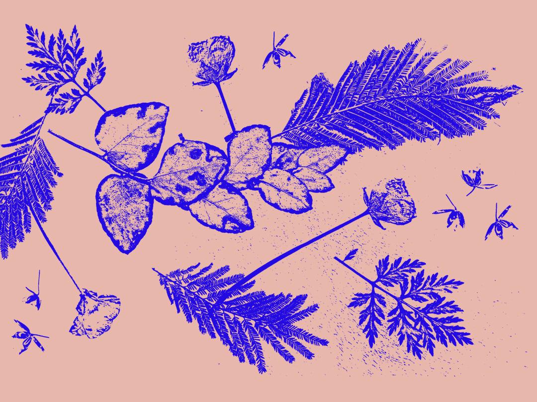Herbier herbier patterns nature artwork 2019 graphicdesigner graphicdesign creative illustration design flower illustration flowers