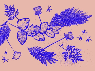 Herbier herbier patterns nature artwork 2019 graphicdesigner graphicdesign creative illustration design flower illustration flowers