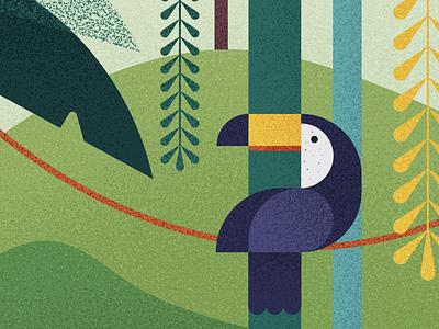 🦜 animal forest botanical amazon jungle bird toucan illustrator vector illustration graphic karolienpauly