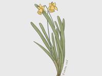 Ephemeral plant
