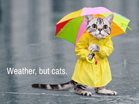 Weather Whiskers