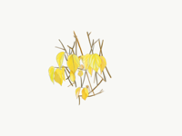 Yellow sense on winter