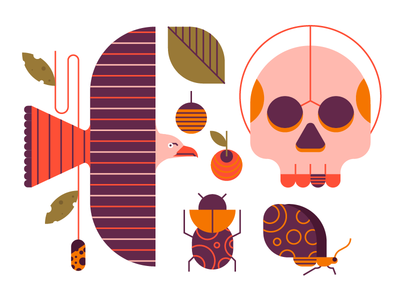 Exploring Icons nature design butterfly berries plant leaves skull eagle illustrations icons style exploring