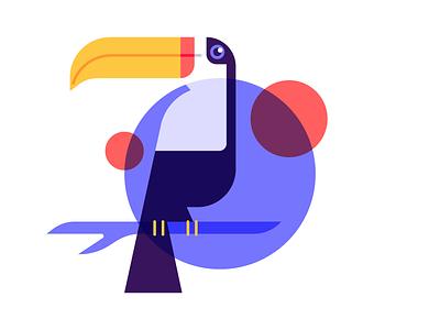 Toucan nature colors design illustration animal exotic bird toucan