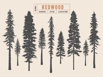 Redwood woodland wood nature spruce redwood evergreen douglas fir pine illustration vector silhouette tree