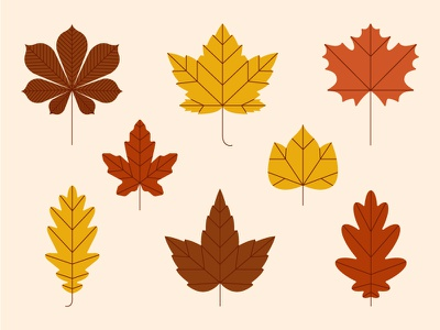 Autumn Leaves 2d flat illustration fall autumn plant chestnut maple oak foliage leaf leaves