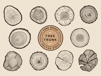 Tree Growth Rings illustrator cross-section tree rings trees trunk tree hand drawn nature art design retro vintage flat vector illustration