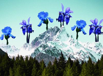 April Iris Mountains