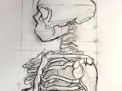 Skull and Ribcage