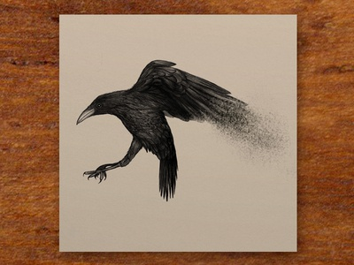Portfolio - Crow for David Zincke