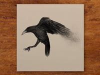 Portfolio - Crow for David Zincke
