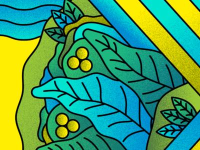 La Sauge flower illustration illustrator organic green plant vegetal flowers