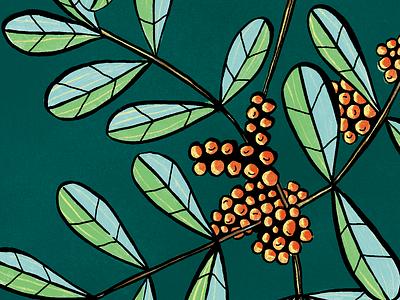 Flowers pistache color ink drawing illustration photoshop nature vegetal design flower