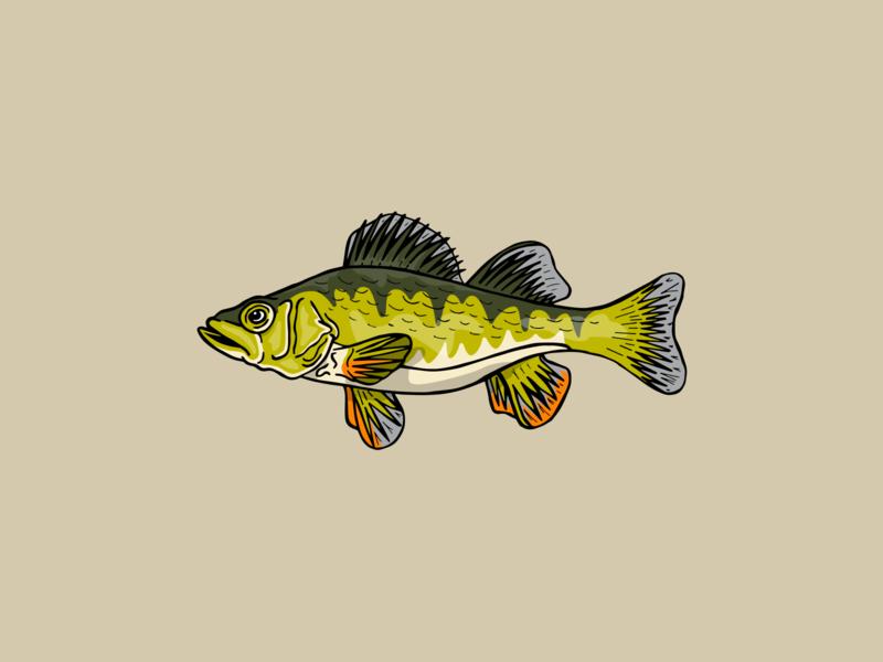 Perch Illustration icon drawing illustration ai vector design