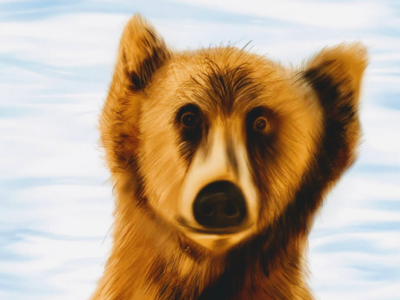 Bear - Close up