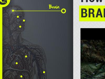 Anatomy Navigation navigation ipad app chartreuse slate c4